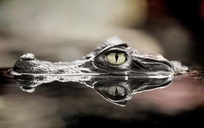 1_krokodyl.jpg