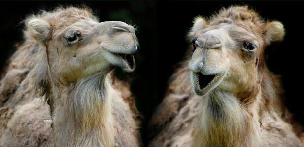 Funny Talking Animals.jpg