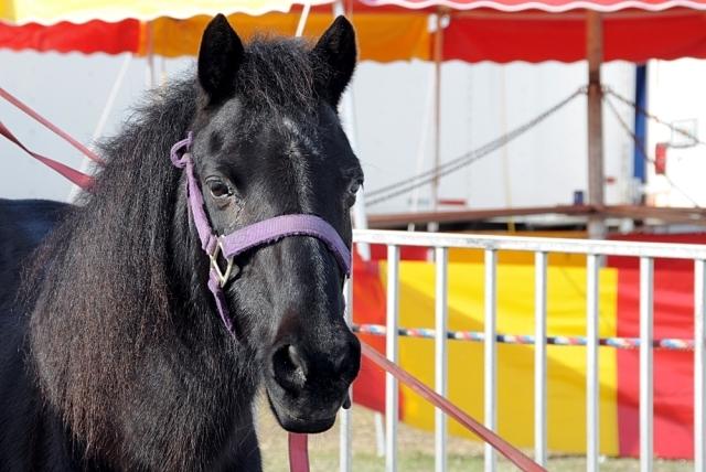 koń.jpg
