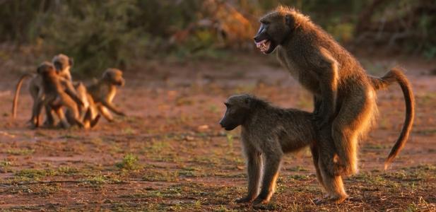 małpy.jpg