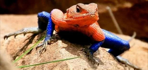 żaba jak spider-man
