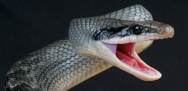 snake .jpg