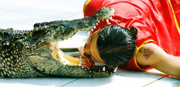 krokodyl .jpg