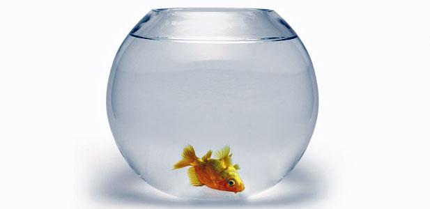 zdechła rybka