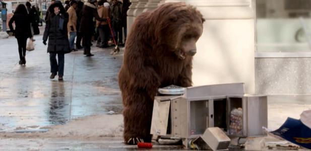 reklama niedźwiedź