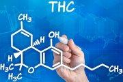 Koniec szkodliwego THC
