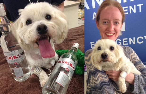 maltanczyk-vodka.jpg