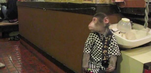 restauracja z małpą kelnerem
