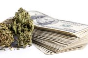 Waszyngton zarobił na legalizacji 450 tys. w 3 dni!
