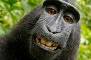 Małpie selfie