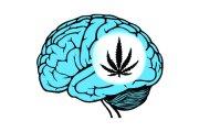 Mózgi palaczy marihuany: mniejsze, ale szybsze