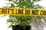 Pole marihuany przy komendzie policji