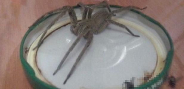 Jadowity pająk w polskim sklepie