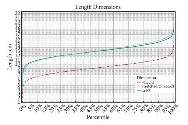długość-penisa.jpg