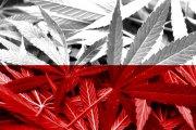 Pierwsza uprawa konopi leczniczych w Polsce