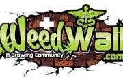 WeedWall - ziołowe imperium