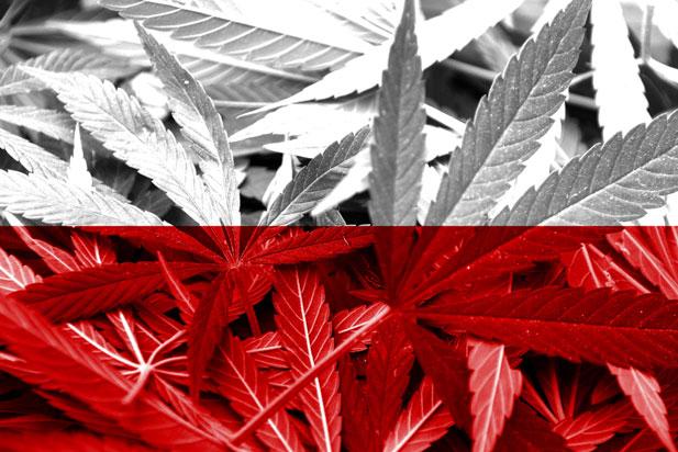 legalna-plantacja-w-polsce.jpg