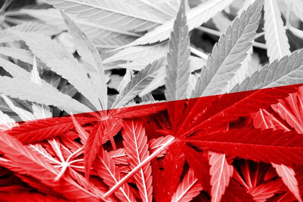 marihuana-polska.jpg