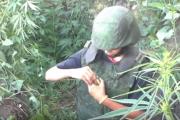 Dzieci bawią się granatami na polu marihuany