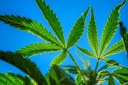 Marihuana z nieba