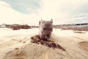 Zawód: przytulacz wombata