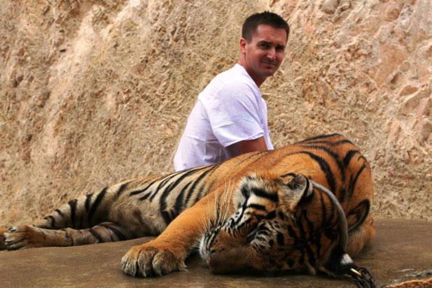 tygrys-zoo-poznan.jpg