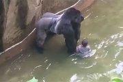 Goryl vs dziecko [WIDEO]