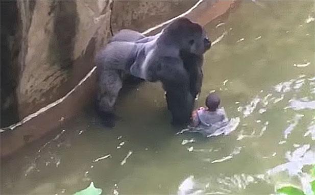 goryl-vs-dziecko.jpg