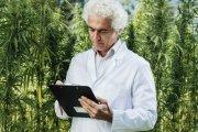 Kolejny kraj legalizuje marihuanę