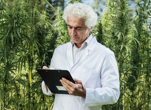 turcja-marihuana.jpg