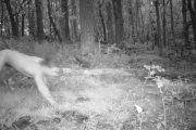 Naćpany przebiegł Polskę nago