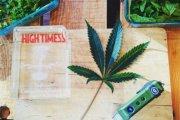 Top Cannabis Chef  - gotowanie na marihuanie