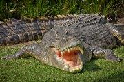 Gatunek krokodyla nazwany po Lemmym z Motörhead