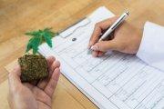 Pierwszy pełnoprawny kierunek studiów o marihuanie