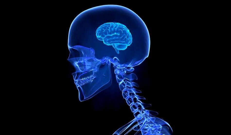 mały mózg.jpg