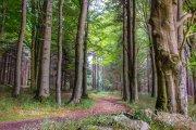 Zakaz wstępu do lasów. Jest już na to sposób