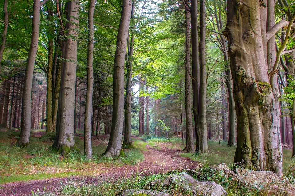 prywatny las.jpg