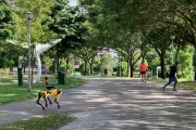 Pies-robot patroluje park. Pilnuje dystansu społecznego