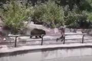 Niedźwiedzie znikną z wybiegu. Wszystko przez pijanego intruza