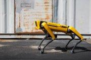 Sprzedaż psów-robotów ruszyła. Tanio nie będzie
