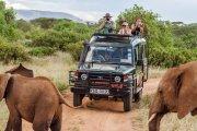 Wybierz się na safari, nie wychodząc z domu