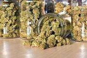 Ponad pół kilo marihuany na własny użytek. Taką legalizację to my rozumiemy