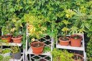 49-latka uprawiała w ogródku konopie. Nieźle się na nich dorobiła