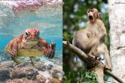 Zobacz najśmieszniejsze zdjęcia zwierząt, które wygrały w międzynarodowym konkursie