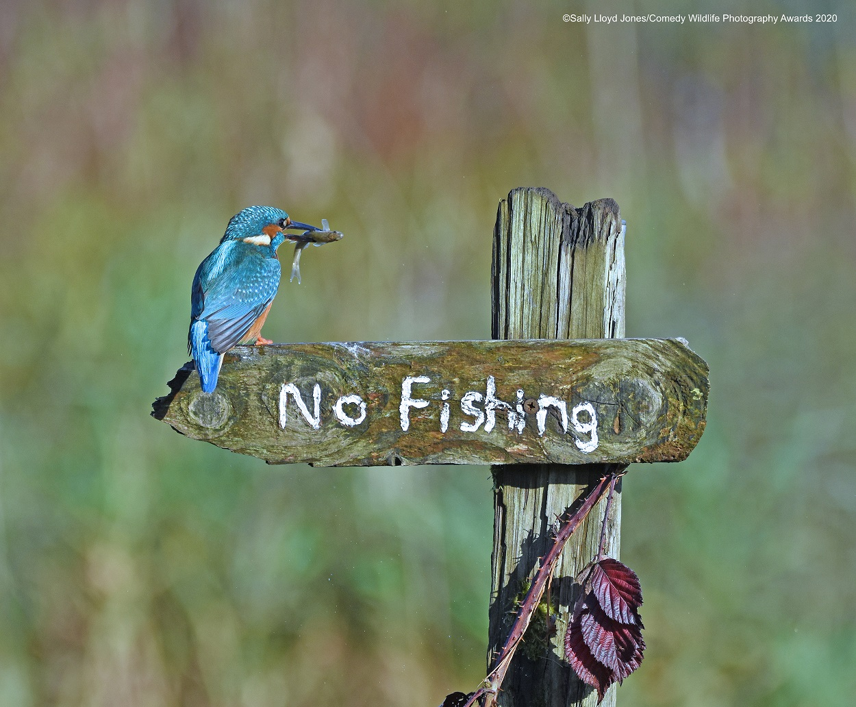 Sally-Lloyd-Jones_Its-A-Mocking-Bird_00001239.jpg