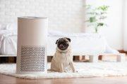 Drażni cię nieprzyjemny zapach w mieszkaniu? Zastanów się nad odświeżaczem