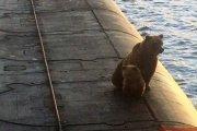Takie rzeczy tylko w Rosji. Niedźwiedzie na atomowej łodzi podwodnej