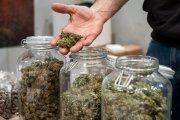 Posiadanie marihuany będzie legalne? Politycy pracują nad projektem