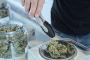Powstaje pierwsza w Polsce poradnia leczenia marihuaną medyczną