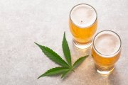 Czym skutkuje połączenie alkoholu i marihuany. Czy warto ryzykować?